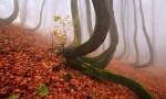 Skrivno življenje dreves