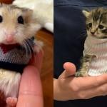 Prikupne živalce s puloverji