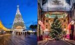 Božična drevesa 2016