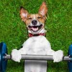Fitko - fitnes za pse