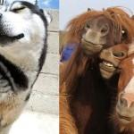 Živalski selfiji