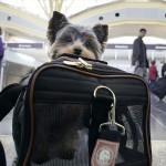 JFK ima terminal za živali