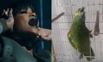 Rihanna on papiga