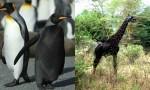 živali črne kot noč