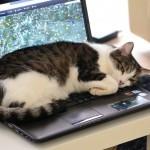 Mačke na računalnikih in knjigah