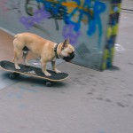 Pes, ki rolka