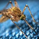 Od danes naprej bo vse drugače: 10 razlogov, zakaj imajo komarji raje tebe kot nekoga drugega