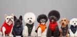 Moncler × Poldo Dog Couture: luksuzna kolekcija za psičke