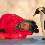 cover-pingvin