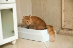 litter-box-filler-cats