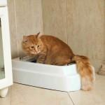 litter-box-filler-cats