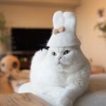 Te kape za mačke so obnorele internet