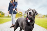 tractive-gps-dog-with-tracker-2