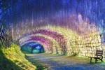 Tunel Wisteria, Japonska
