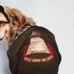 Spoznajte Maxdonna, psa, ki rekreira Madonnine scenske konstume in naslovnice albumov.