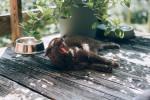 Kot kaže, mačke niso edine, ki uživajo ob pitju iz posodice.