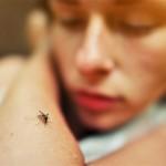 Noben komar se ti ne bo približal: s tem odženeš komarje!