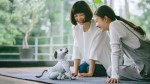 Sony Aibo: vaš novi najljubši kužek je lahko tudi robot