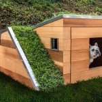 Doggy Dreamhouse