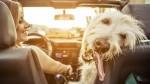 Življenje je le eno: nevarne stvari, ki jih počneš v avtu, a tega ne veš