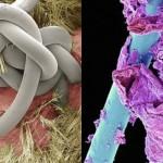Tako so videti pod mikroskopom stvari, ki jih vsakodnevno uporabljamo.