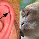 6 osupljivih ostankov evolucije, ki ljudje ne potrebujemo več