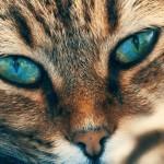 Mediterranean Winner Show 2019: razstava mačjih lepotcev