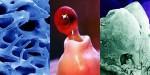 Kakšni so človeški organi pod mikroskopom?