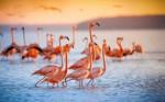 Zakaj plamenci (flamingi) stojijo na eni nogi?