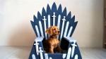 Ljubitelji Iger prestolov, zdaj lahko kupite železni prestol za svojega ljubljenčka