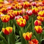 Spomladanska razstava v Arboretumu 2019: tu se začne pomlad!