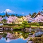 Cvetenje češenj na Japonskem