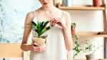 One bodo uspevale: 10 rastlin za tvoj dom, ki jih NE MOREŠ UBITI