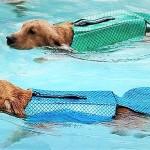 Albabara: rešilni jopič, ki tvojega psa spremeni v pravo morsko deklico