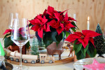 2019_poinsettia_04000_christmas_miniatures_08