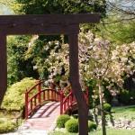mozirskigaj-pomlad-2020-japonski-vrt